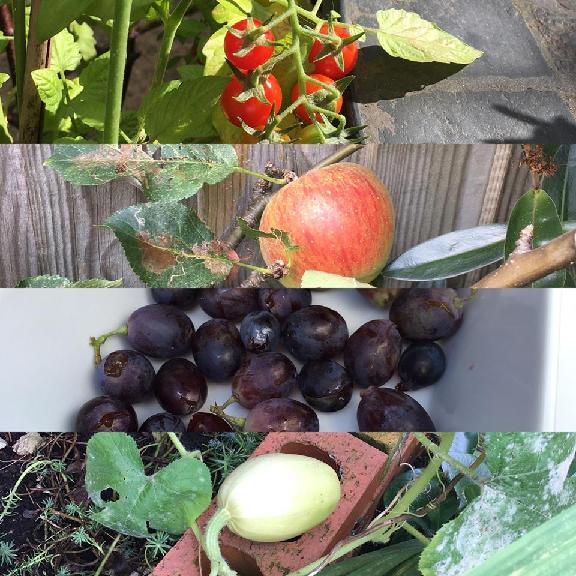 2016_harvest