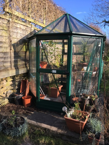 The gorgeous greenhouse