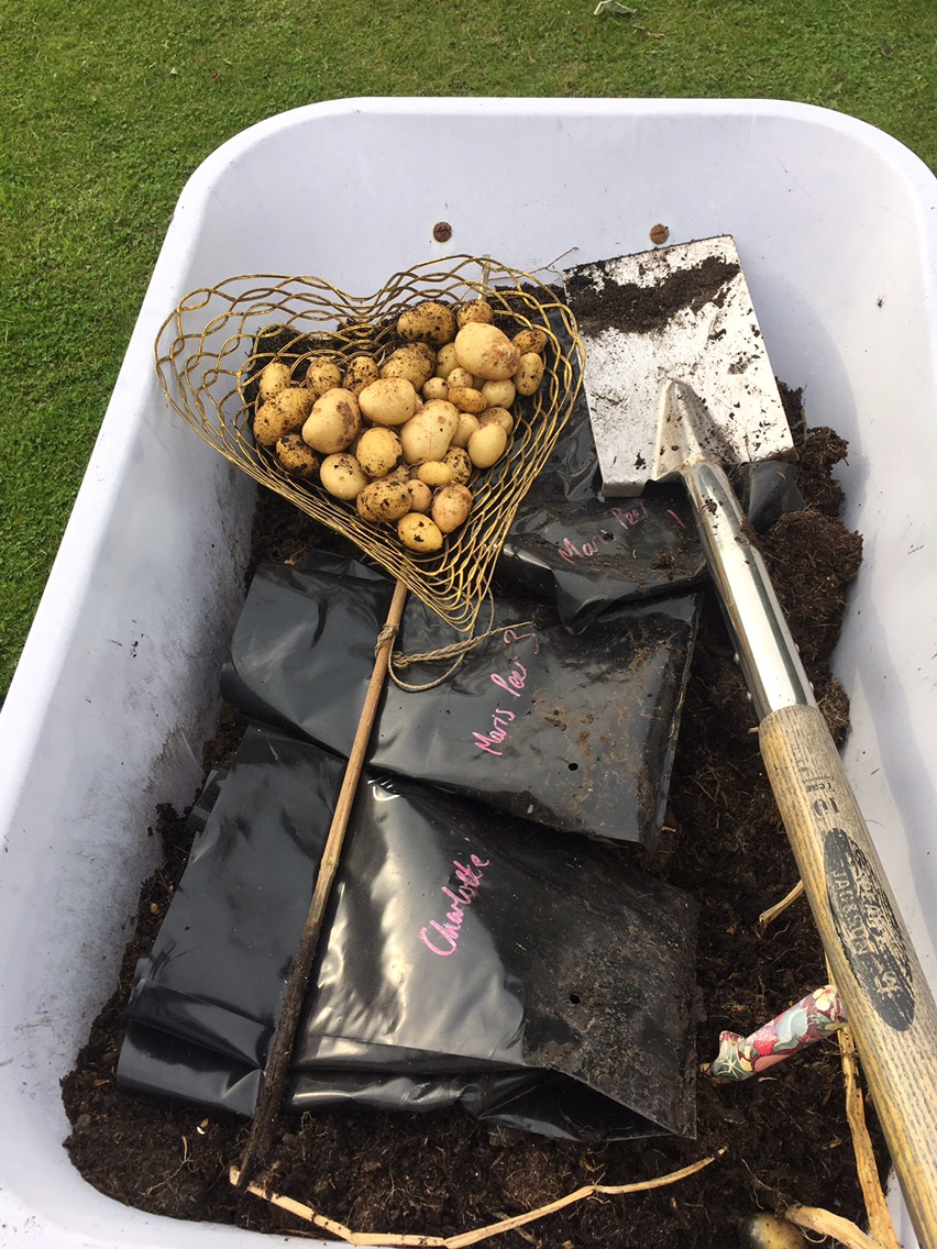 Potato palavers and lessons learned