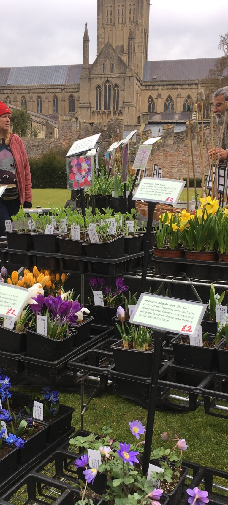 Rare Plant Fair at Wells