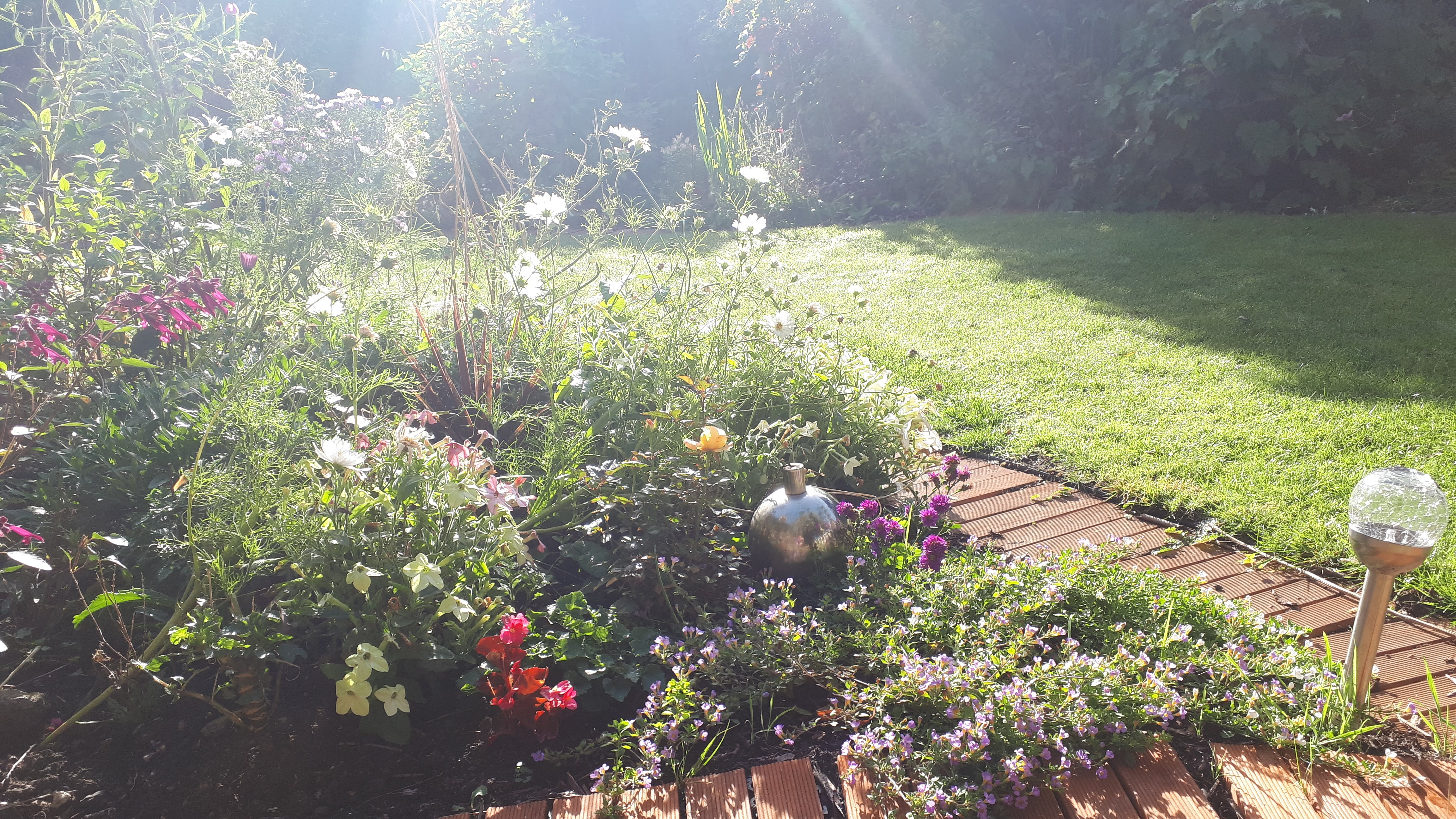 Six on Saturday in late September: a cottage garden walk through