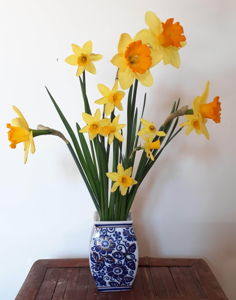 Daffodils in a vase on Monday