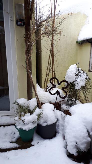 Feb1-Snow