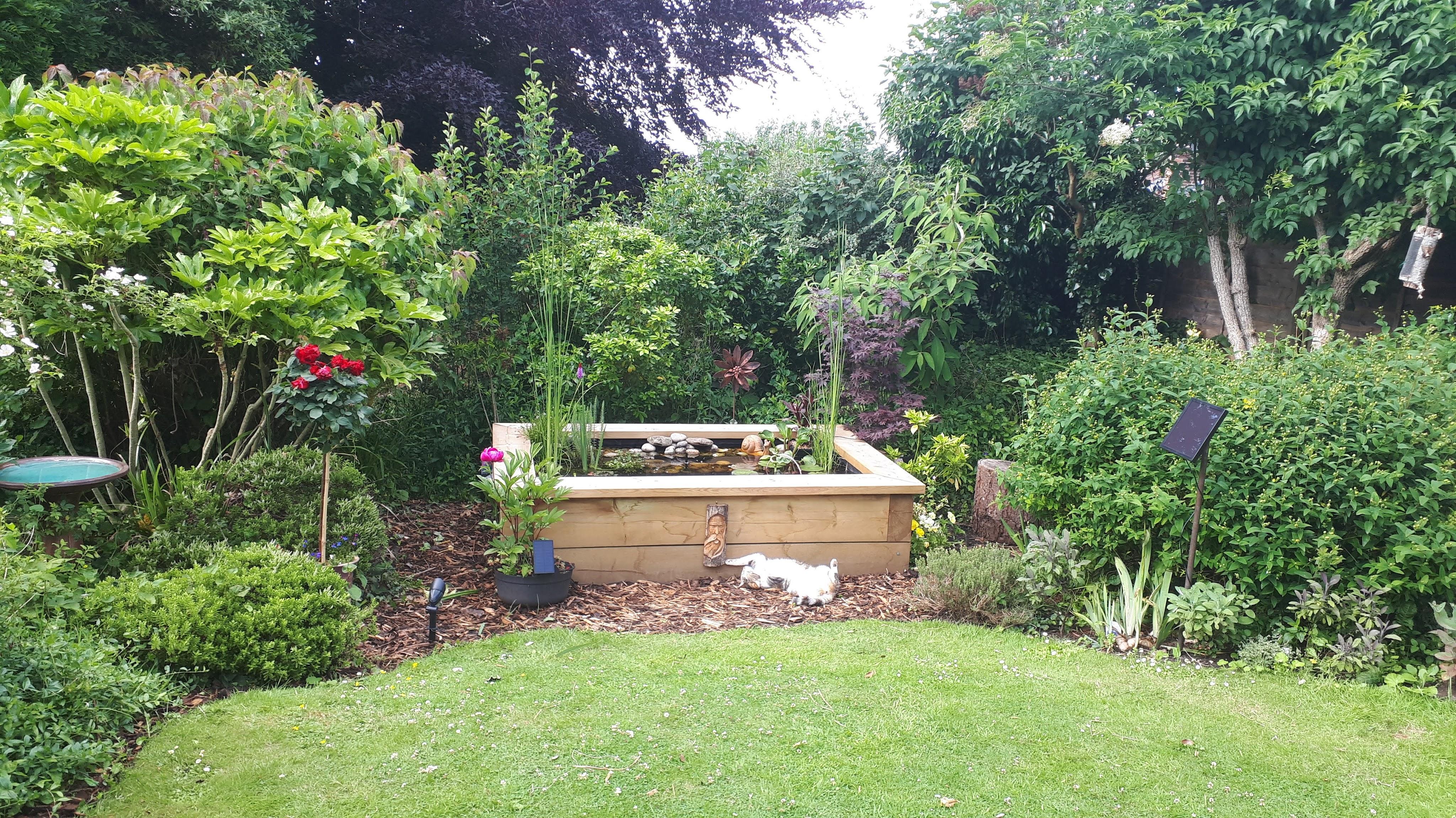 Six on Saturday: Cherries and chiffchaffs in a wildlife friendly cottage garden
