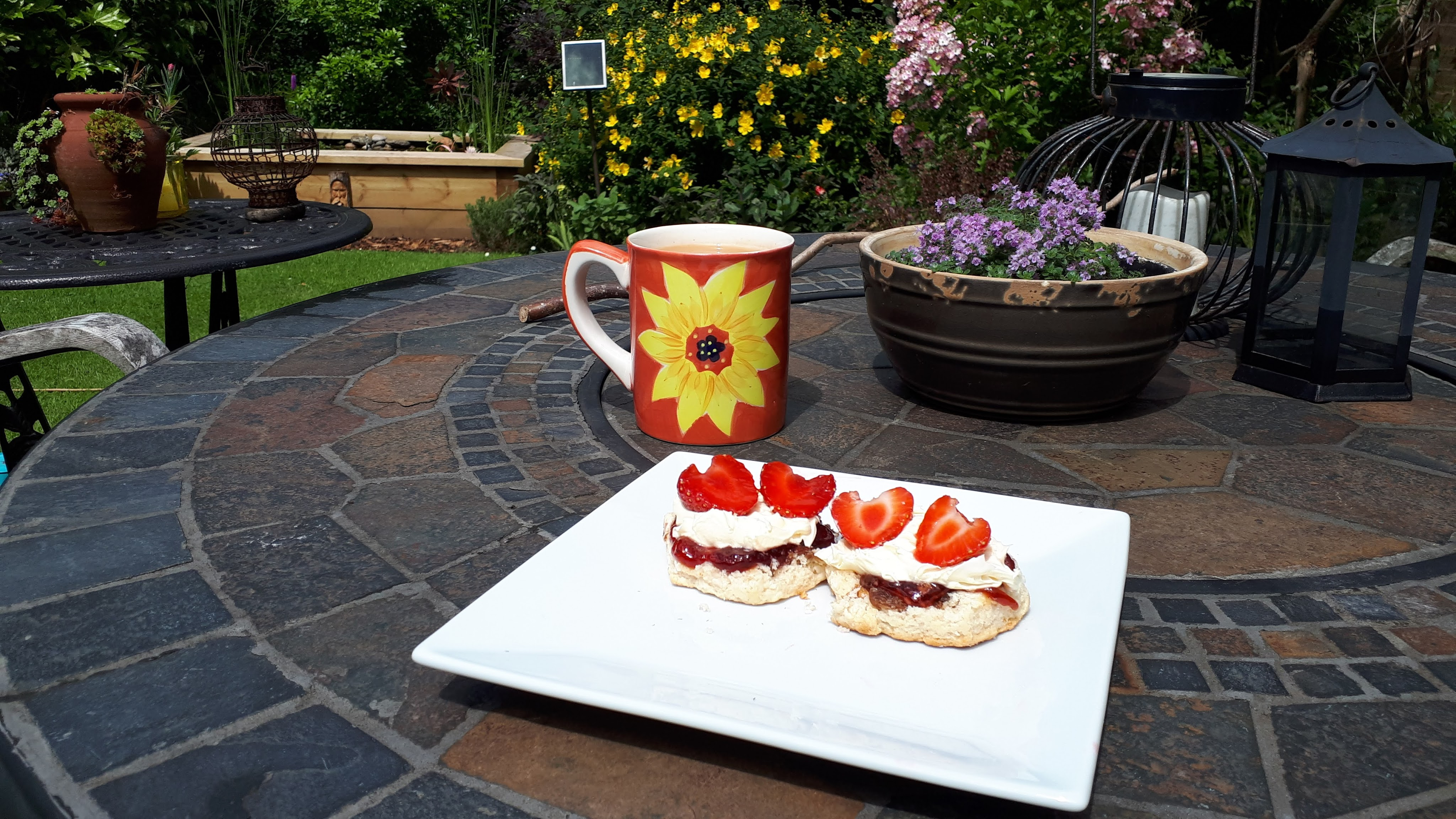 Waterlily and strawberry cream tea, Six on Sat, July 2021