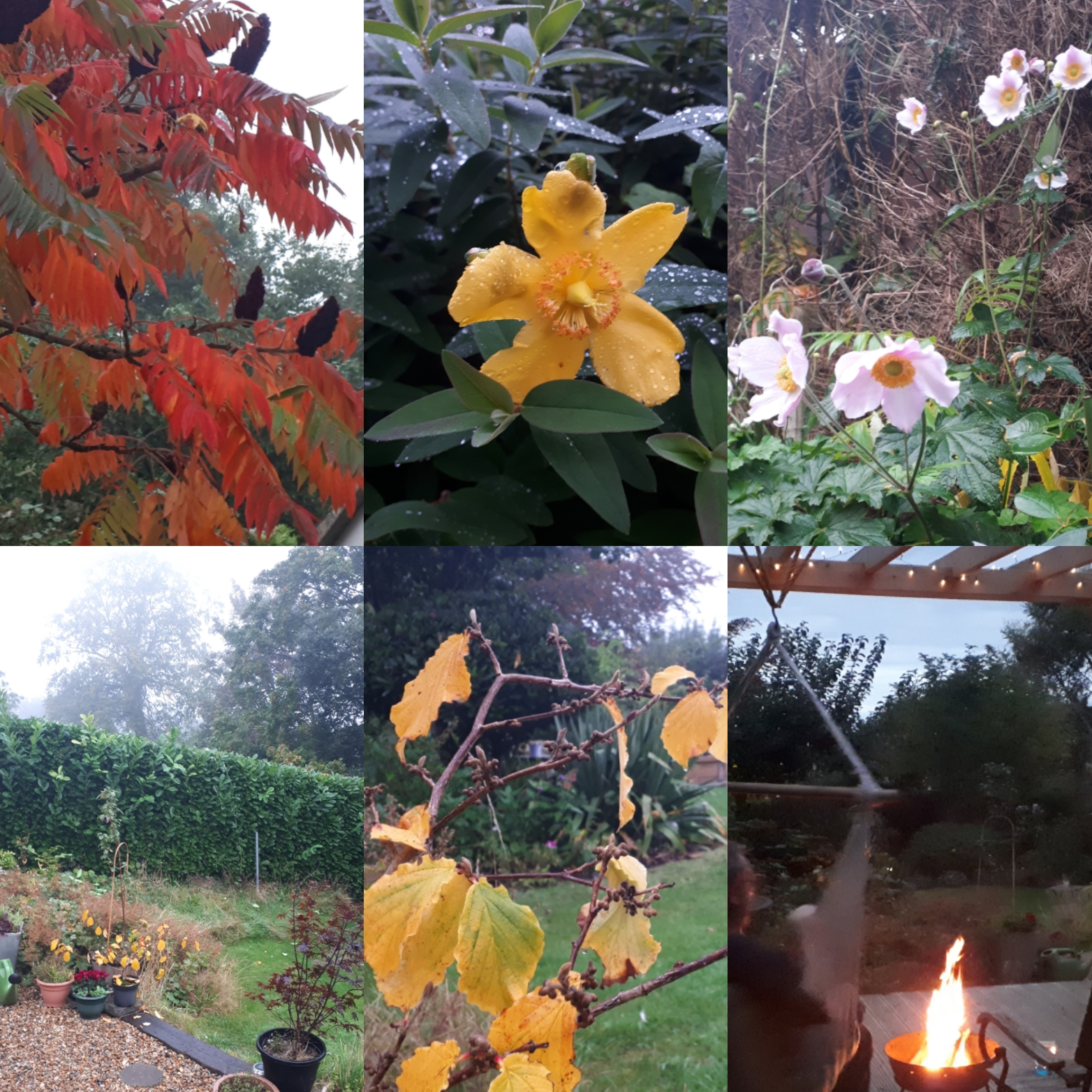 Six on Sat: misty mornings and cosy nights
