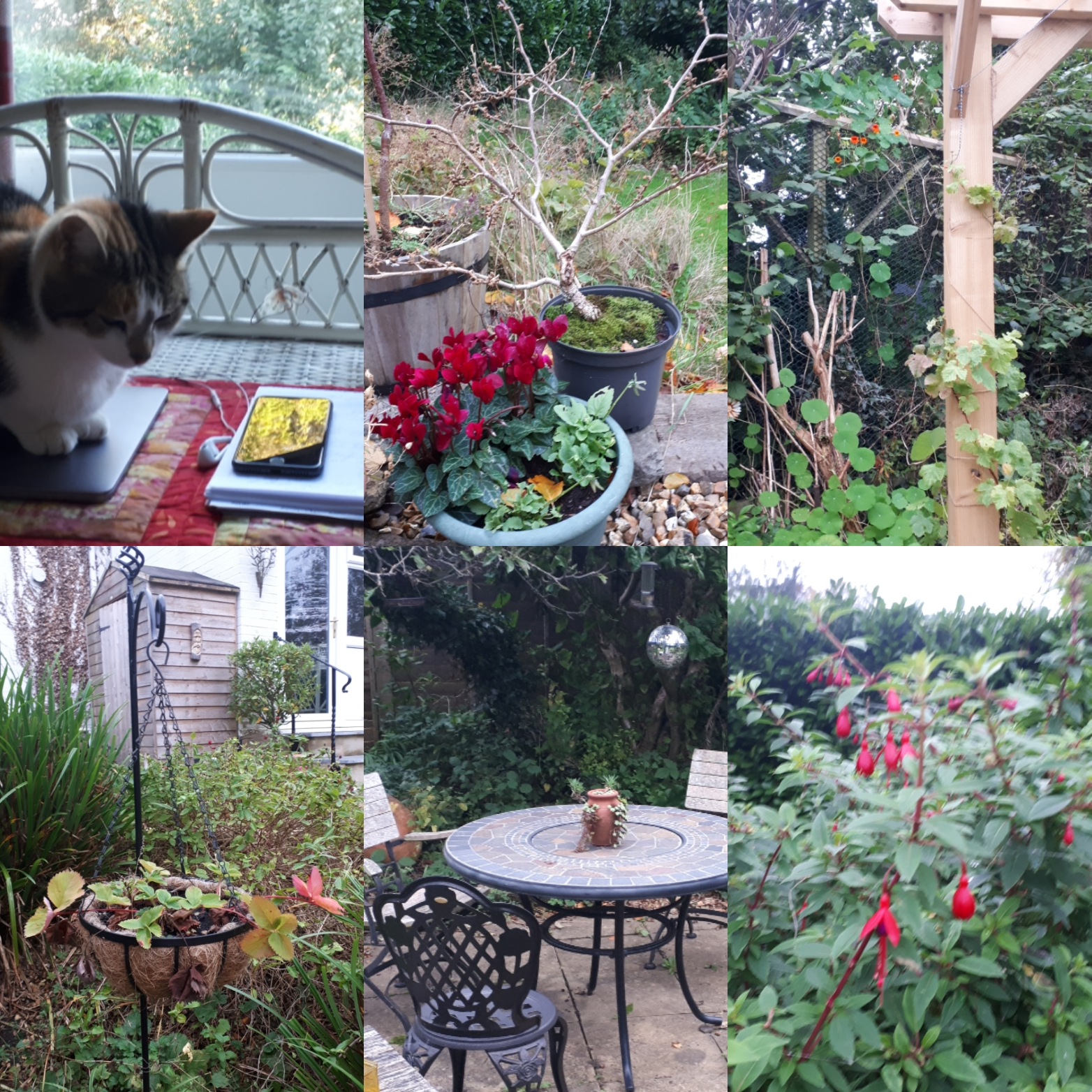 Six on Saturday: unhelpful cat, witch-hazel, resilient blooms and future forests film